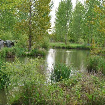 Oak Lake - Gabriels Fishery, Kent